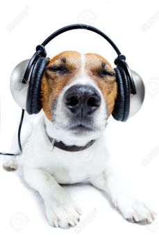 11993933-dog-listening-music-with-headphones-Stock-Photo